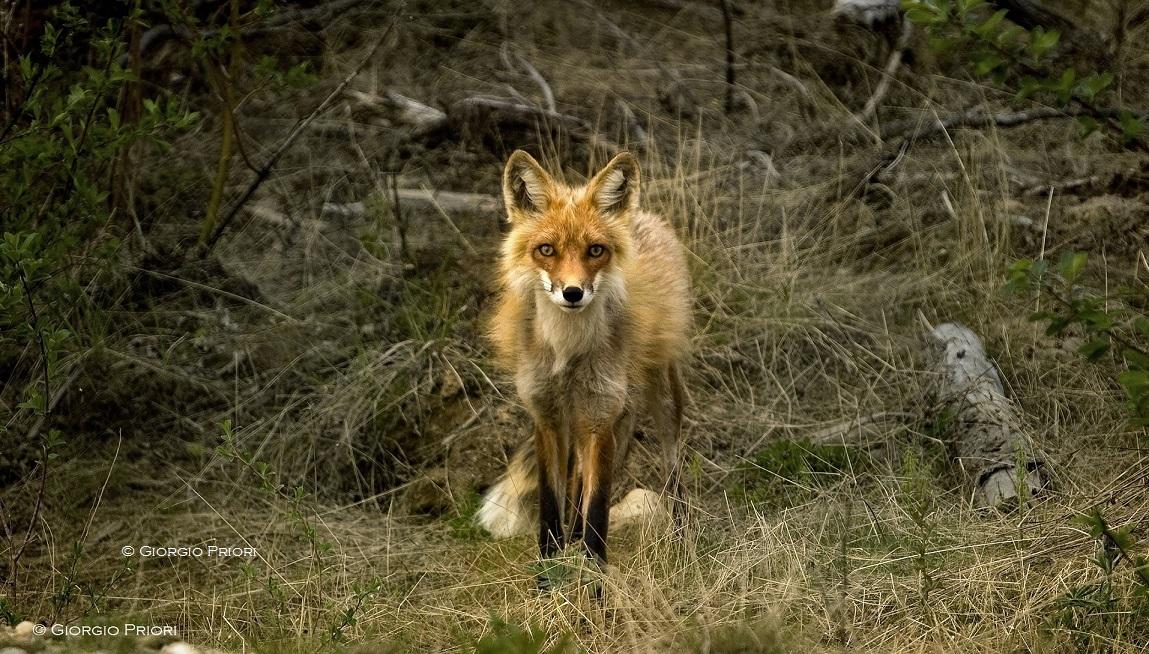Safari in Umbria - Marco Priori Natural Survival (8)